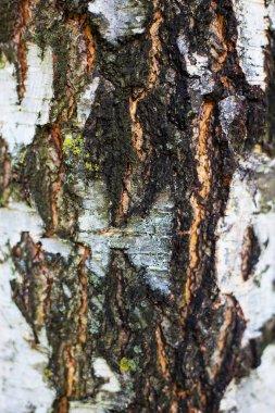 Reserves of birch logs closeup. Wallpaper