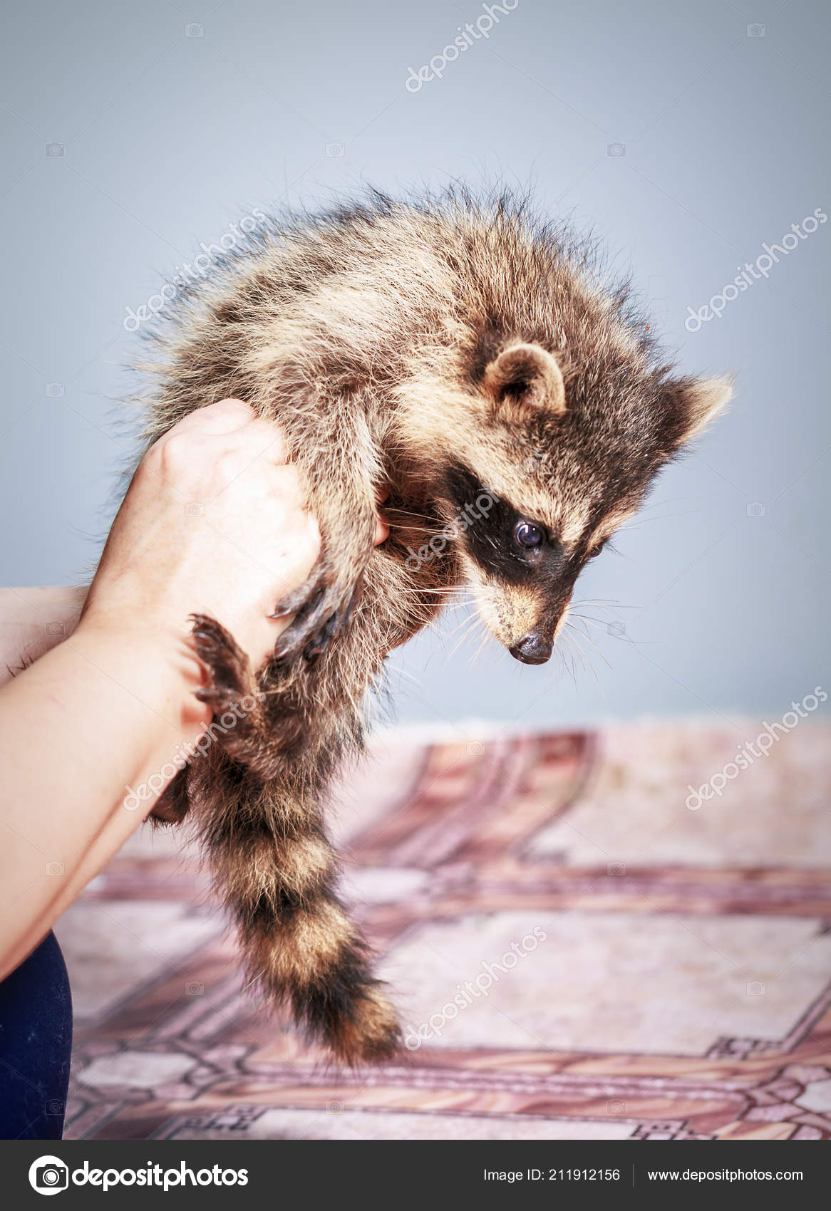 single women in raccoon A florida sheriff's deputy has posed for a selfie with a raccoon after authorities were called in to help remove the furry creature when it broke into a woman's home.