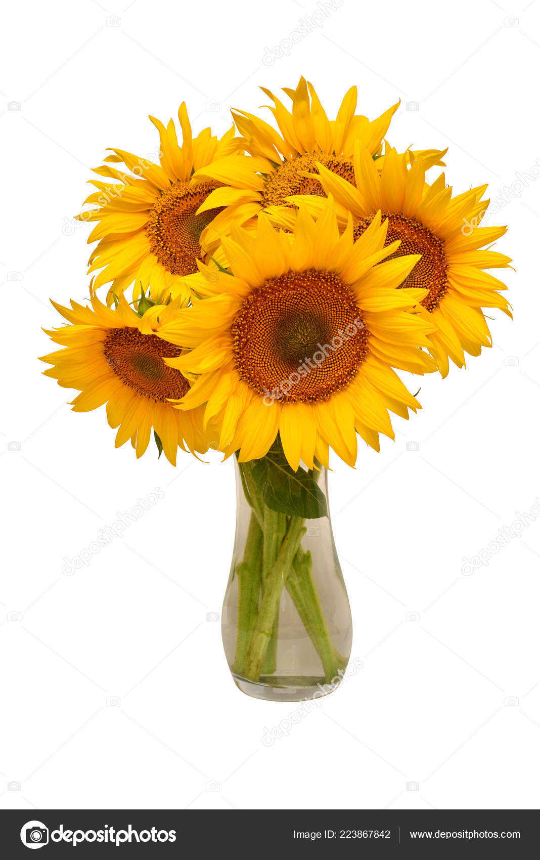 Vase Flower Arrangement Ideas Creative Still Life Idea Flowers Sunflower Bouquet Glass Vase Isolated Stock Photo C Ian 2010 223867842