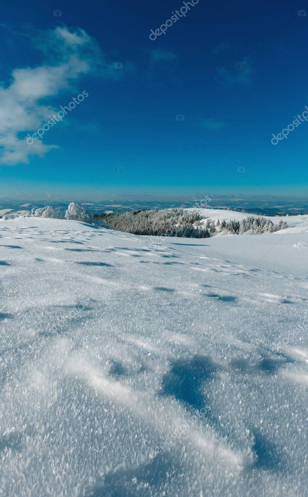 Winter calm mountain landscape with frosting trees and snowdrifts on slope. High recognizable stitch image with great depth of field (zone of acceptable sharpness begins from crystalline snowflakes).