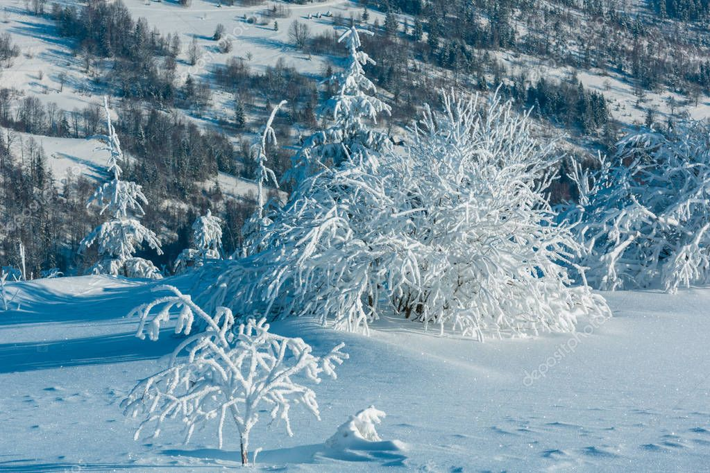 Morning winter calm mountain landscape with beautiful frosting trees and snowdrifts. Stitch image with great depth of field (zone of acceptable sharpness begins from crystalline snowflakes in front).