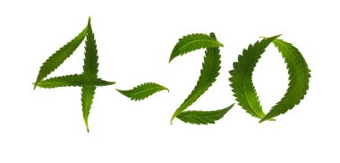 April 20 written with cannabis leaves over white