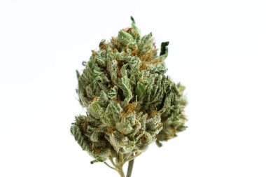 Cannabis bud over white