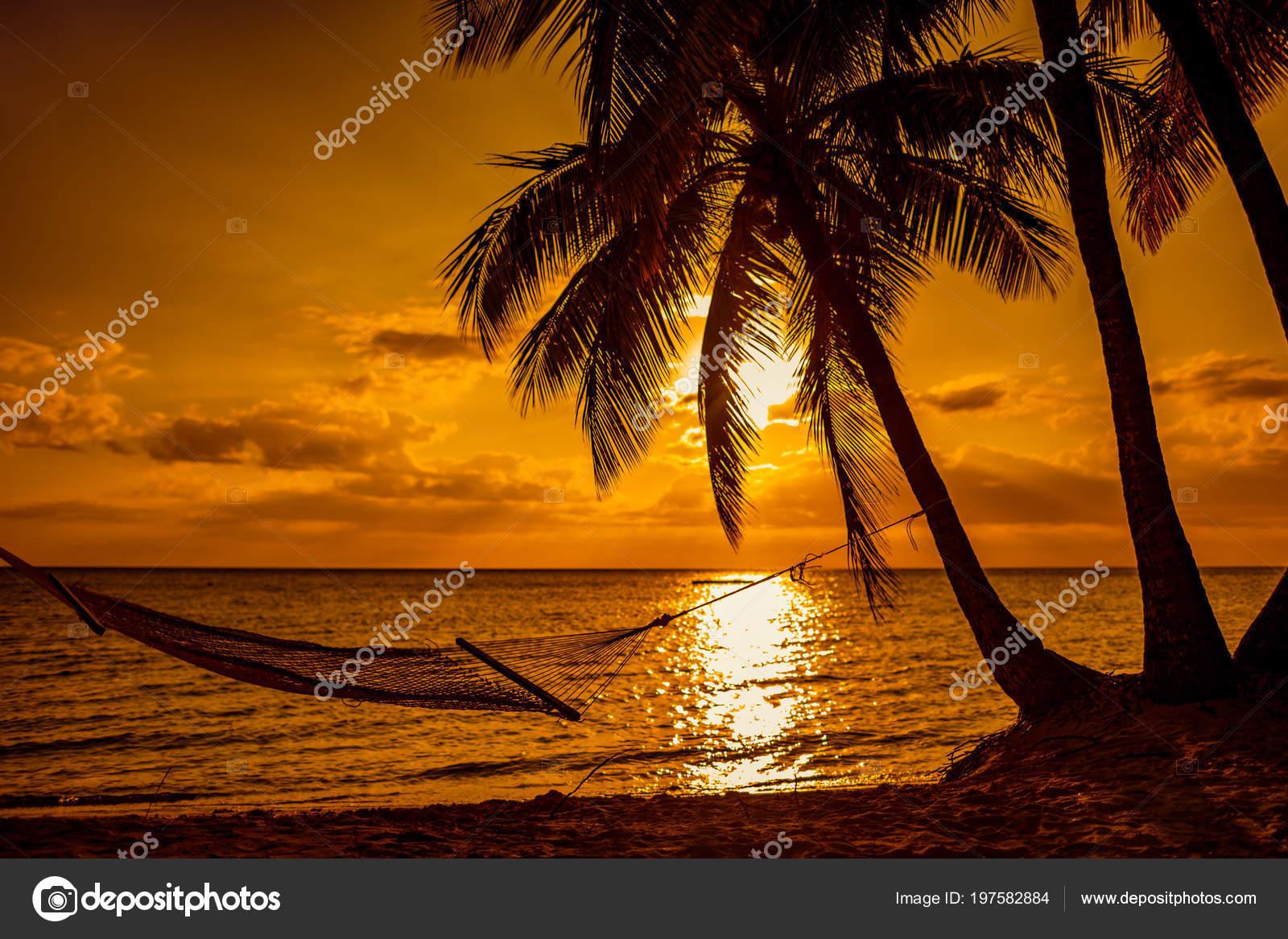 Silhouette Hammock Palm Trees Tropical Beach Sunset Fiji