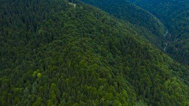 """Картина, постер, плакат, фотообои """"Вид сверху, горы, покрытые хвойными лесами"""", артикул 290523586"""