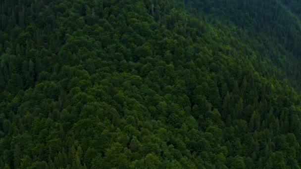 im Sommer über den Wald in den Bergen fliegen