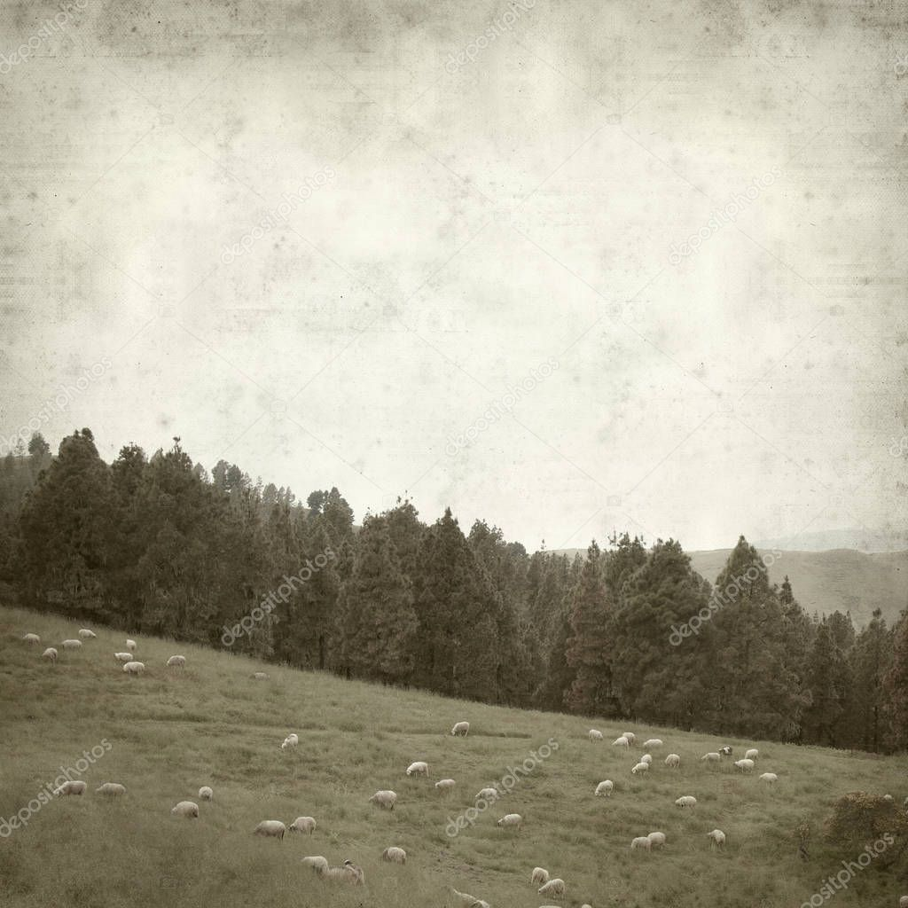 textured old paper background with Gran Canaria landscape with flock of sheep