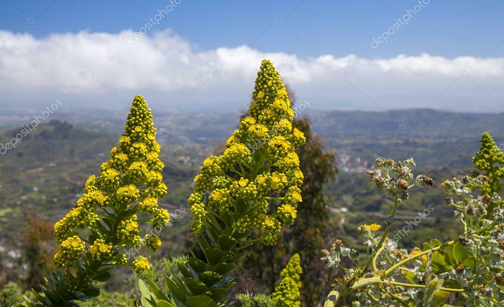 Gran Canaria in flower