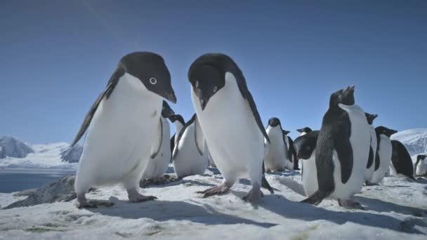 Zár-megjelöl lejátszás pingvinek. Táj Antarktisz.