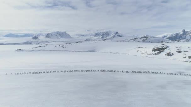 Volo aereo sulla migrazione di pinguini. Antartide