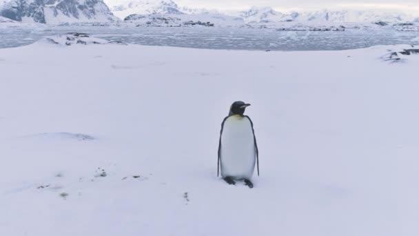 Antarktiszi vadvilág természetvédelmi táj király pingvin