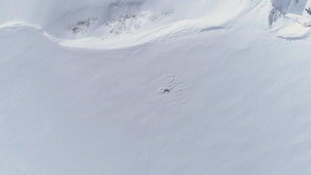 Antarktida dítě dospělý tuleň Weddellův přiblížit antény