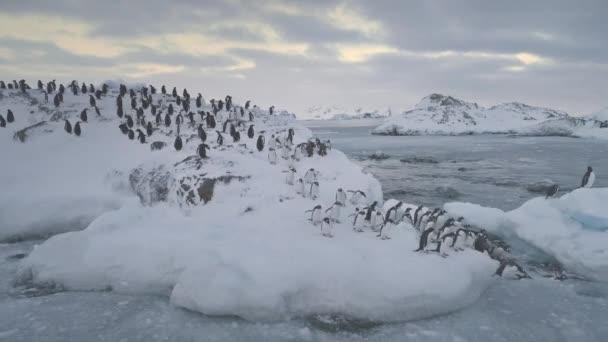 Gentoo Penguin jump Antarktis Gletscherwasser