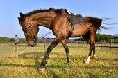 Fotografie horse walking on the field