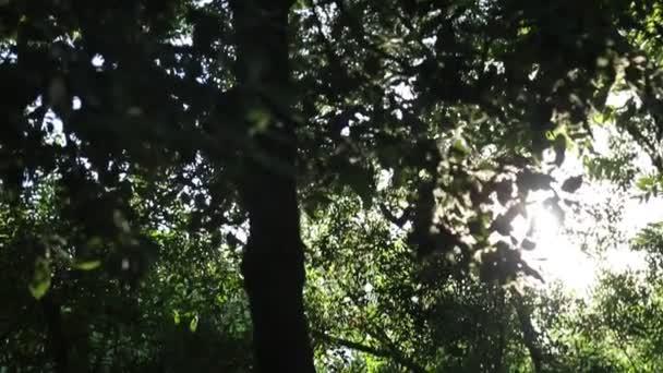 Sonnenstrahlen scheinen durch die Äste des Baumes