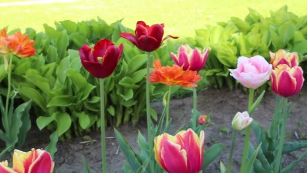 Turty kvetou ve jarní době. Vybrané zaměření.
