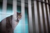 Fotografie Kranke Katze warten auf Behandlung im Käfig der Tierarzt Klinik