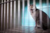 Fotografie Kranke Katze wartet im Käfig der Tierklinik auf Behandlung
