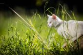 Rendkívül aranyos fehér cica egy szép réten