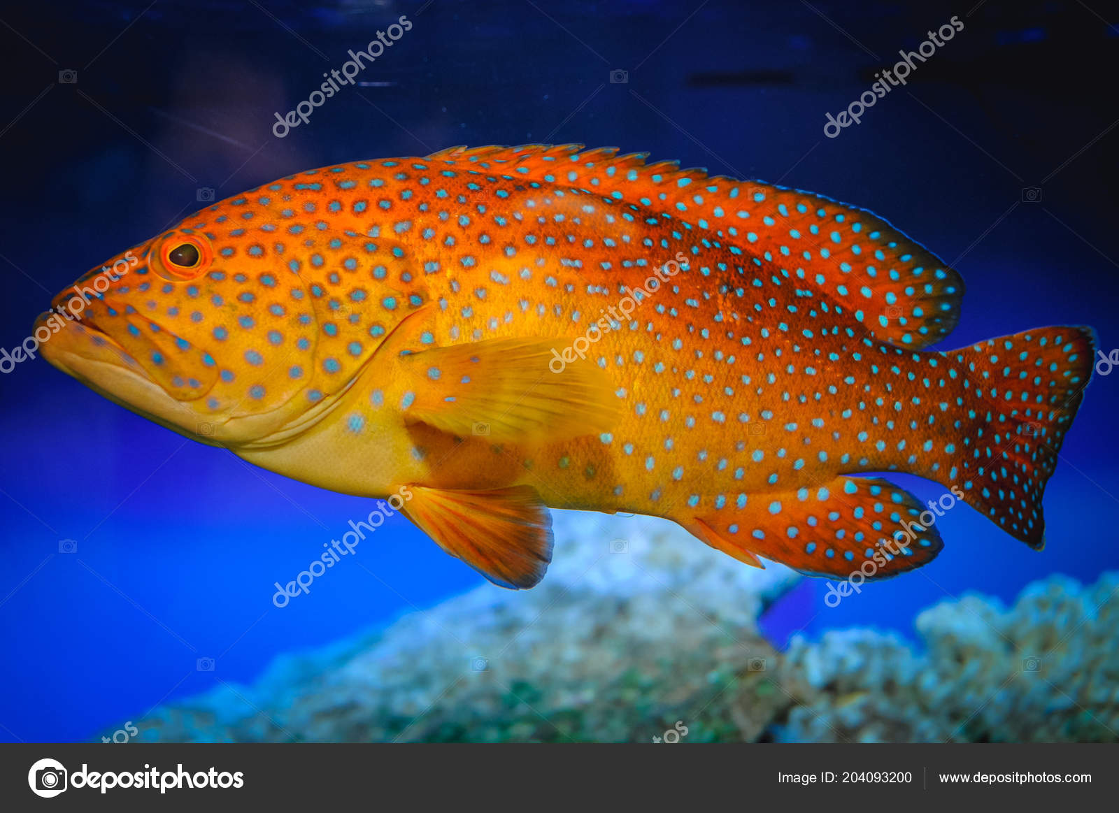 Exotic Fish Swimming In A Large Tank Photo By Fotokon