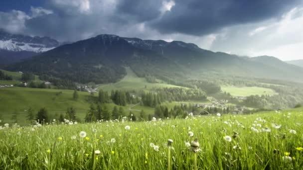 pole jarních dandeliů, Dolomitů, Jižní Tyrolsko, Itálie