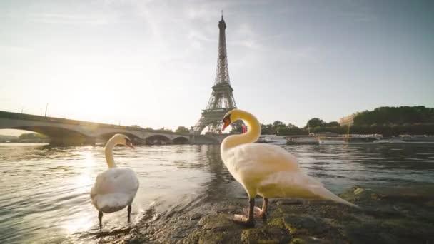 bílá labutě Eiiffelova věž a slunečné ráno, Paříž. Francie