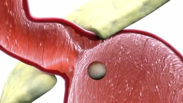 Lidské trávicí soustavy a břicha