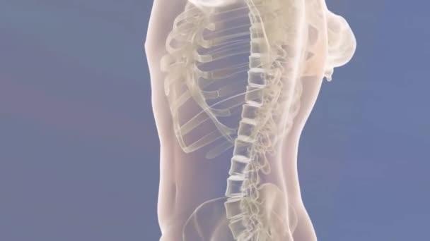 lidské tělo a kostry