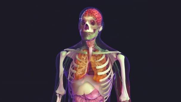 lidské tělo a orgány