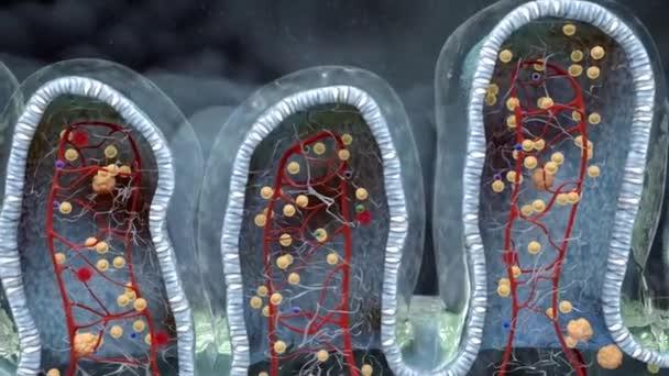 žaludeční sliznice trávicí systém 1