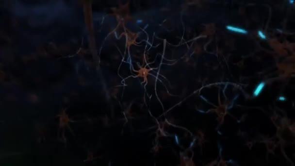 Neurony v mozku. Smyčka. 3D animace neuronové sítě