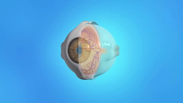 Age related macular degeneration. Yellow spot disease.