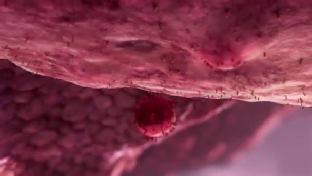 3D animace zářících virových buněk, virů, virové buňky pod mikroskopem