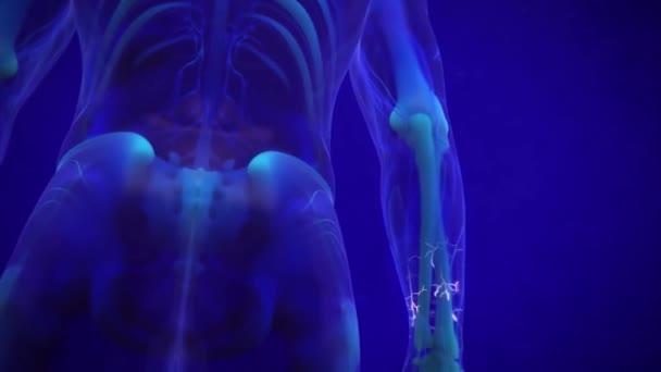 Orvosi animált emberi idegrendszer kék háttér