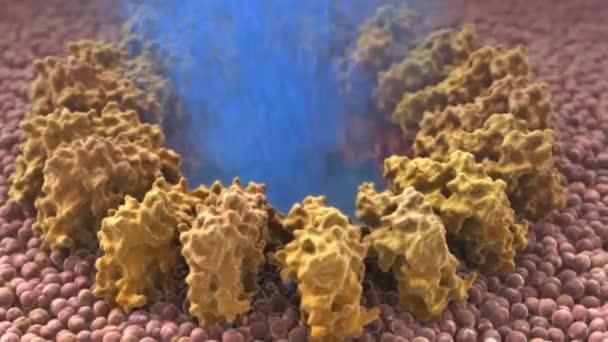 Význam makrofágů v imunitním systému