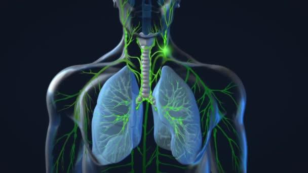 Fungování lymfatického systému lidského těla na černém pozadí