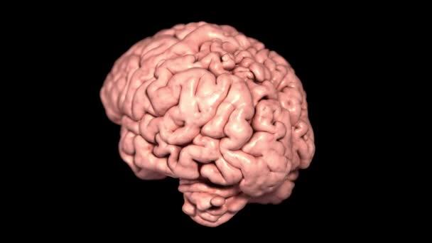 Anatomie otáčení mozku na černém pozadí. 3D lékařská animace