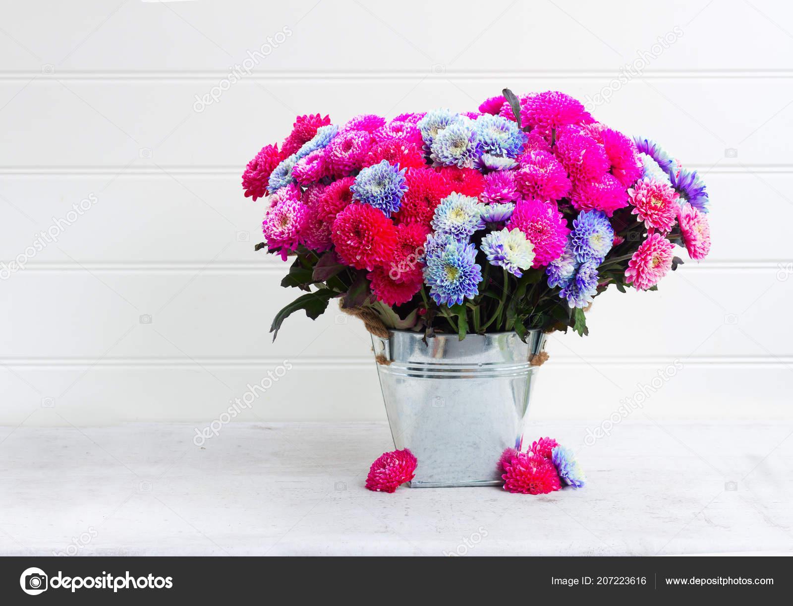 Fall Chrysanthemum Flowers Stock Photo Neirfys 207223616
