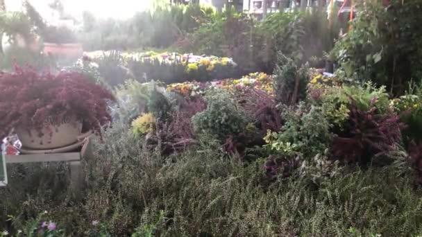 Heide im Garten-center