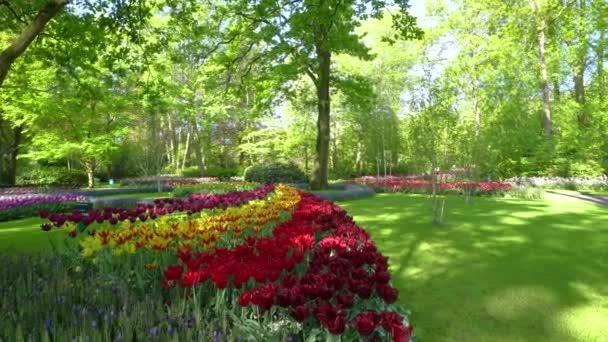 Růžové a červené tulipány