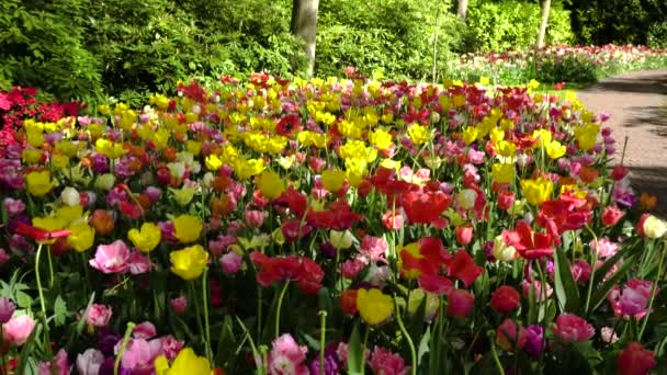 Friss kerti virágok