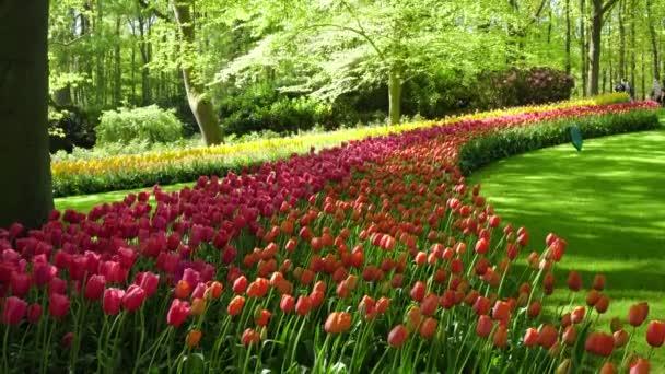 čerstvý trávník s květinami
