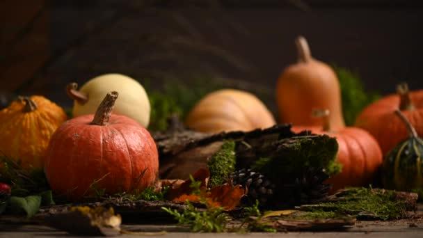 Pumpkins of different sizes. Autumn theme with moss. Slider shot. 4K 3840x2160