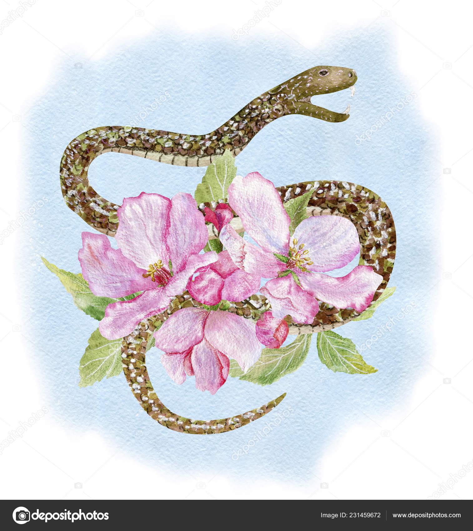 Sakura Et Serpent Bleu Photographie Kusandra C 231459672