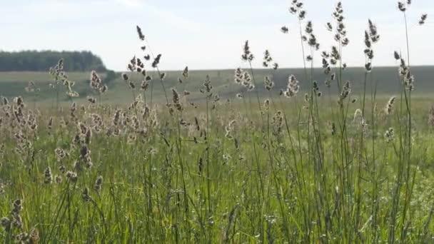 Letní krajina. Květenství ze zelené trávy houpat na pozadí zorané a kopce