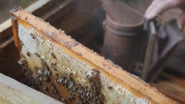 Pracovní včely fungovat plástev, s medem. včelař vytáhne rám s medem. včelař získá snímek s medem. fumigace počítač pro včel, kouř