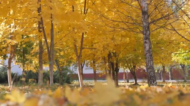 Autumn. yellow leaves falling on the background of trees
