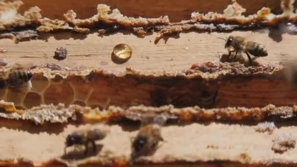 Blick auf den geöffneten Bienenkörper, der die von Honigbienen bevölkerten Rahmen zeigt. Imker sammeln Honig. Imkerkonzept.