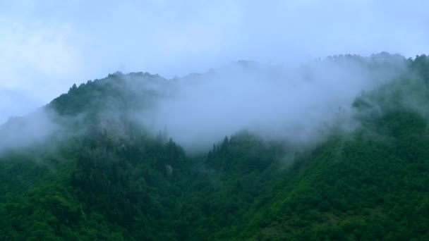 Foggy evergreen forest on the mountain slope