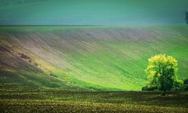 Sunshine view of lonely tree among fields